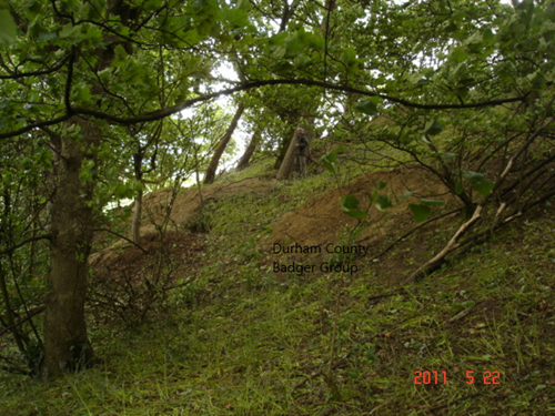 example of sett area with DCBG.png